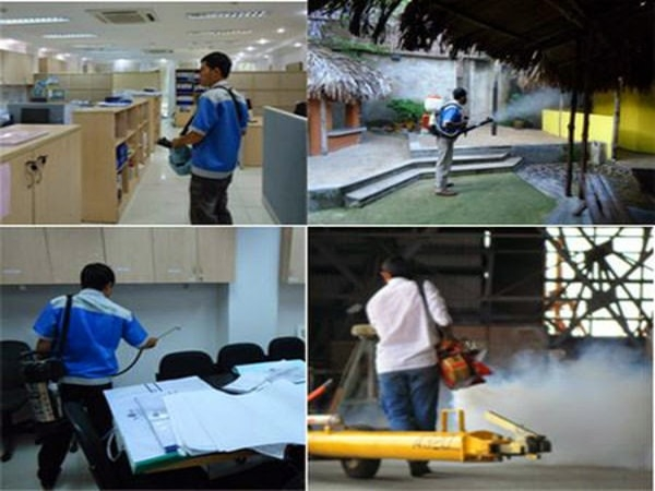Dịch vụ diệt gián mối tại nhà giá rẻ tại Hà Nội