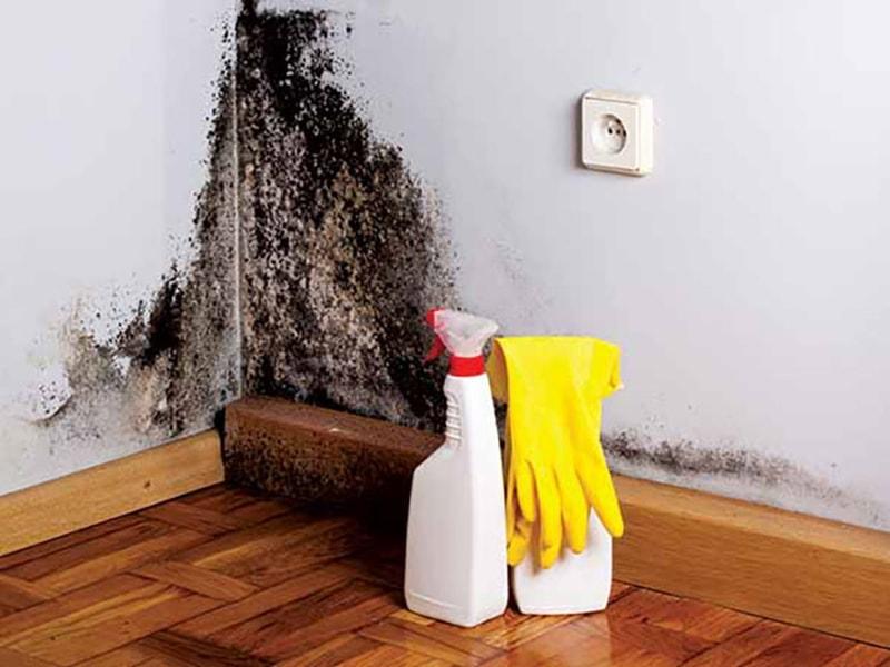 Làm thế nào để xử lý các vết nấm mốc trên tường nhà mùa mưa bão? 2