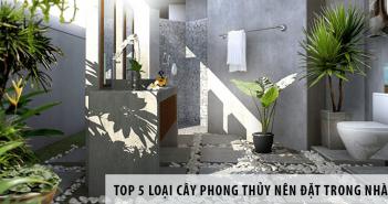 Top 5 loại cây phong thủy nên đặt trong nhà