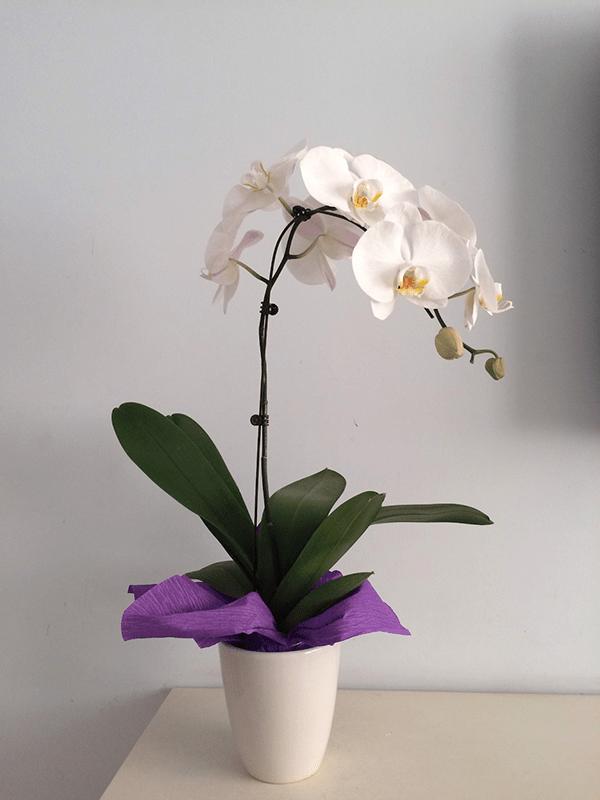 Trang trí phòng khách bằng hoa phong lan
