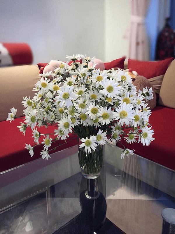 Trang trí phòng khách bằng hoa cúc họa mi